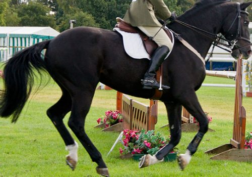 Tips For Riding A Hot Horse