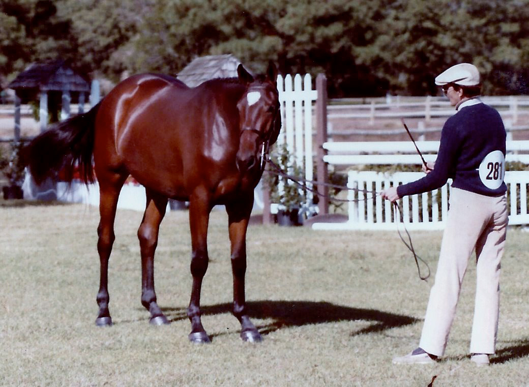 Balalaika Filly at 3 by Keelo -1985