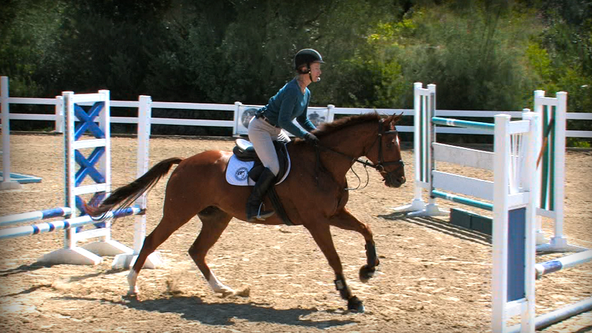 training a thoroughbred horse over jumps