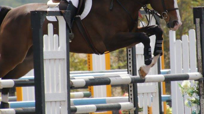 How To Train A Big OTTB To Use His Body Over The Jumps And Improve His Form