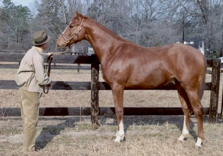 Delmar Twyman standing Sir Thomson at his farm after Tom's arrival from Kentucky as a yearling in 1969