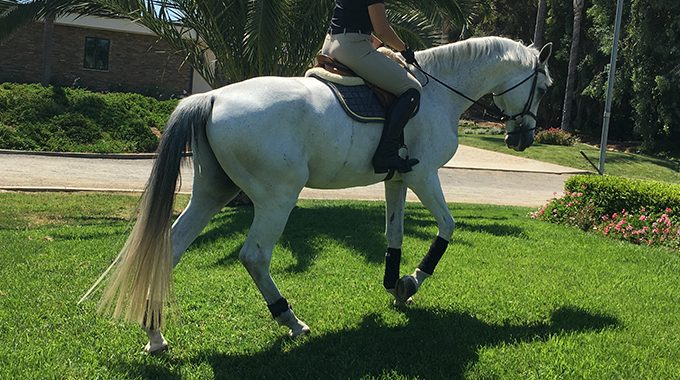 Strengthening Your Horses Hind End