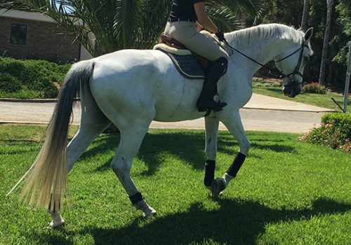 Getting A Horse Back Into Condition After Time Off For An Injury