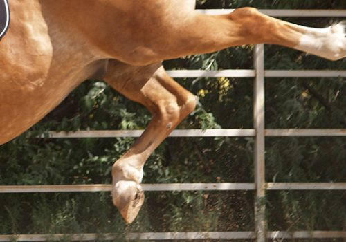 Troubleshooting: Kicking Out At The Trot And Canter