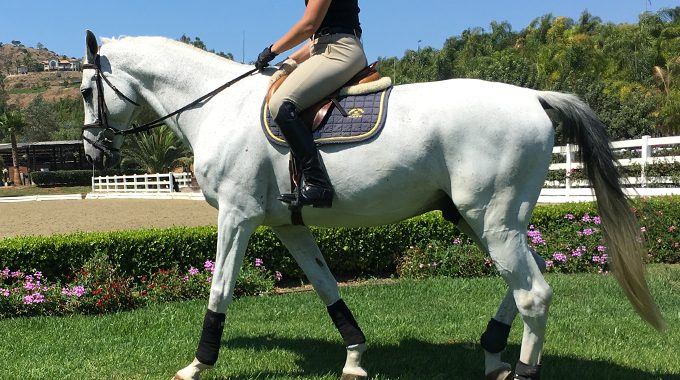 Troubleshooting: Getting Your Horse In Front Of Your Leg