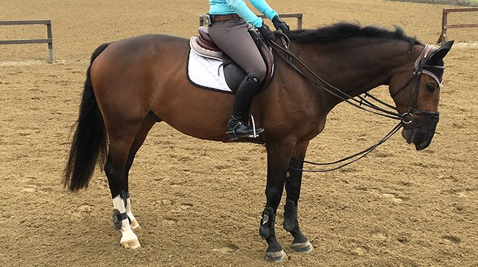 Draw Reins: To Use Or Not To Use - EquestrianCoach.com Blog
