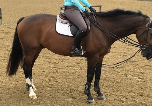 Draw Reins: To Use Or Not To Use