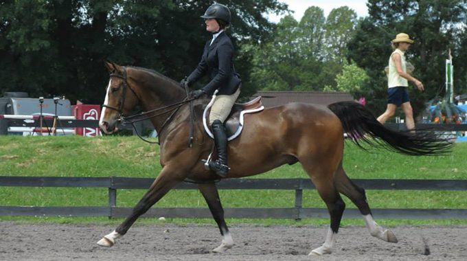 How To Prevent A Horse's Stride From Getting Too Long On The Approach To A Jump