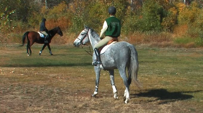 Keeping A Young Horses Attention When Riding