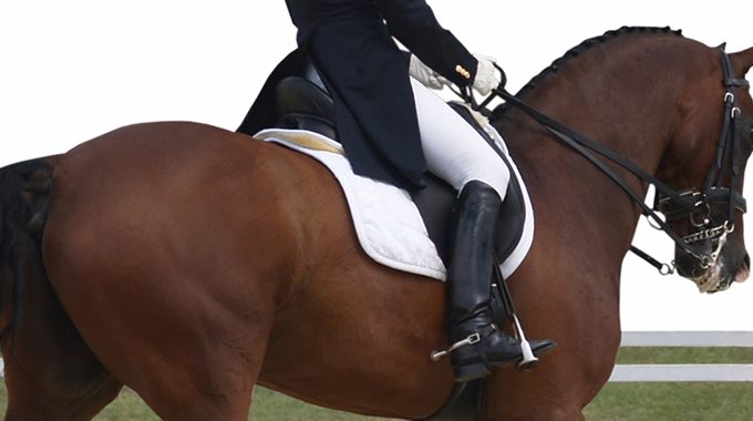 Exercises For Your Dressage Horse's Topline Muscles