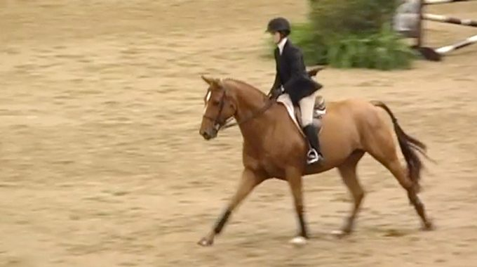 What Is The Ideal Seat For Equitation Classes?