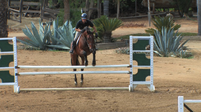 Opening Rein To Straighten Your Horse Over A Jump