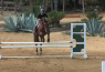 Train Your Horse To Jump Straight