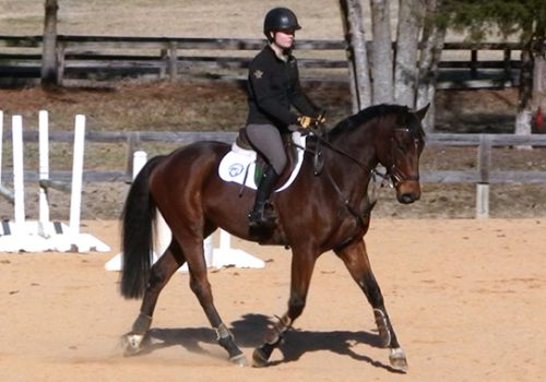 Training A Young Thoroughbred That Is Fresh Off The Track