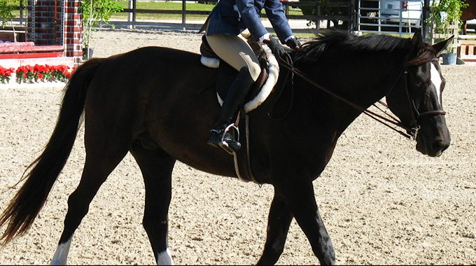 Exercises To Make Your Hunter Horse More Soft And Supple