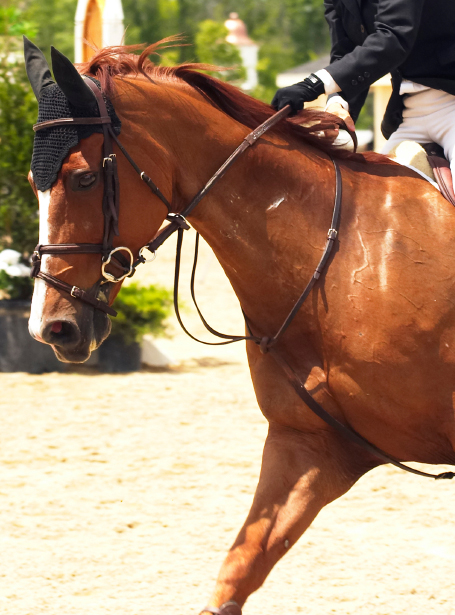 horse wearing a running martingale and flash noseband