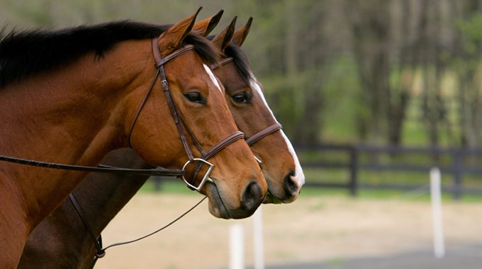 Nosebands And Martingales On Horses