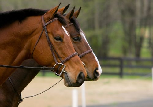 Nosebands And Martingales: Fitting And Use