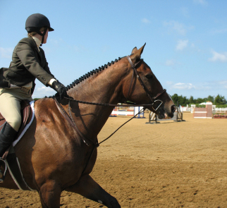 regular noseband and standing martingale on a hunter horse