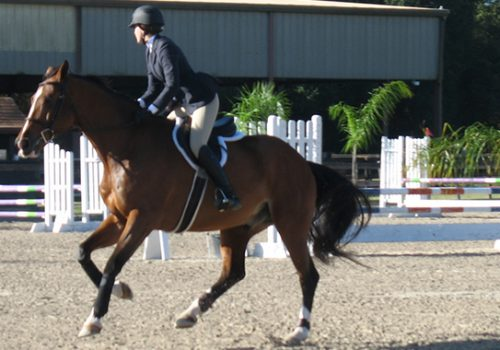 Tips To Slow Down A Thoroughbred Who Rushes At Jumps