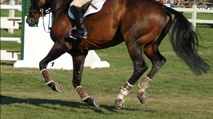 Does Your Horse Change Leads In Front But Not With Their Hind End?