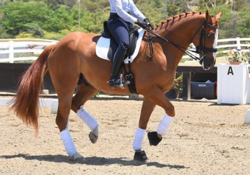 Dressage: Good Hands And How To Achieve Them