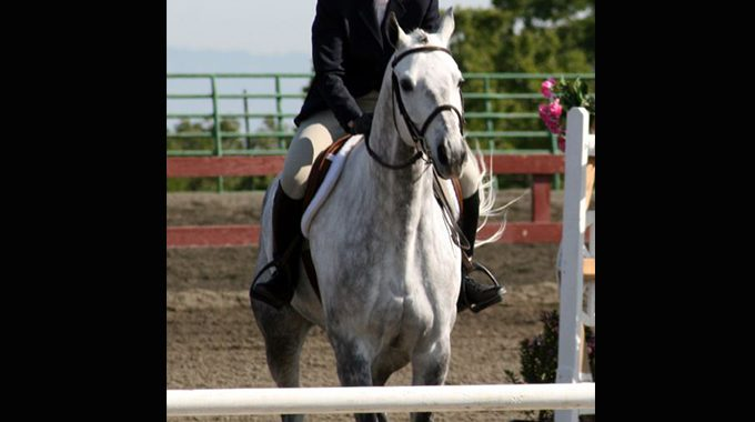 Building Your Horse's Confidence Back Up
