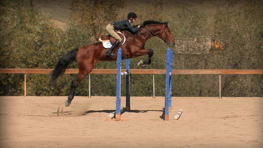 training a horse to jump combination jumps