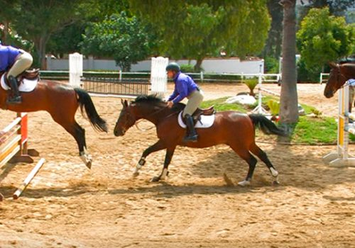 Does Your Horse Have A Long Stride And Struggle With Combinations?