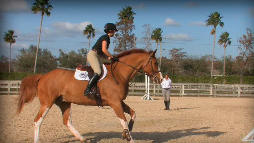 circle exercise over jumps for a horse