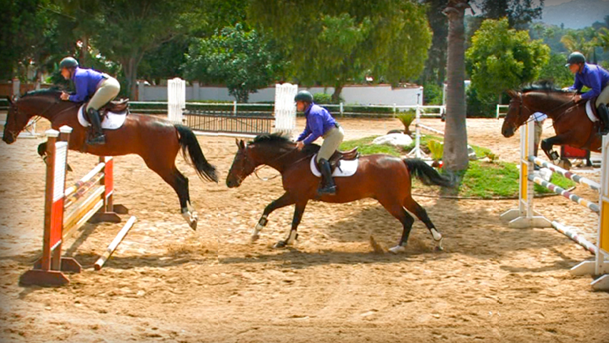 training your horse to jump a vertical combination