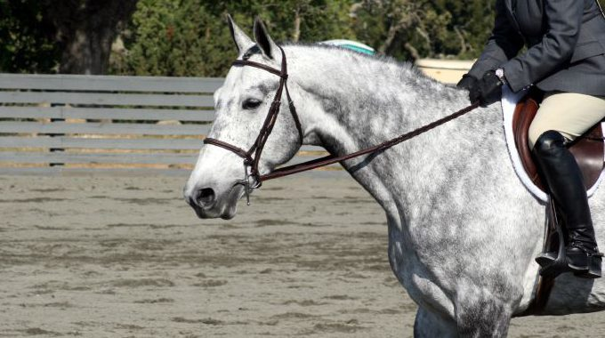 How To Encourage A Hunter Horse With High Head Carriage To Stretch Down
