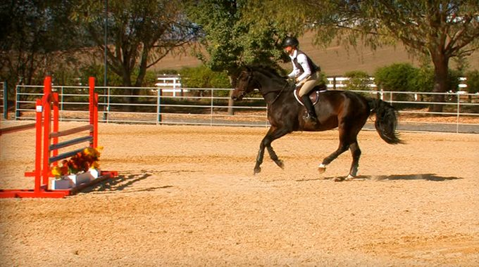 Adjusting For The Optimal Take-off Spot On A Hunter Horse
