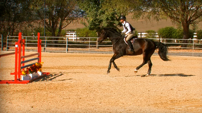 Adjusting For The Optimal Takeoff Spot On A Hunter Horse