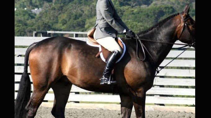 How To Keep Your Reins Short Without Pulling Too Much On Your Horse's Mouth