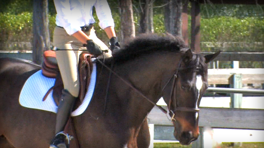 improving a riders arm and hand position on their horse.