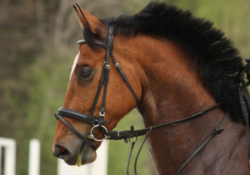 Tips For A Thoroughbred Horse Who Has A Tough Mouth And Who Gets Strong Over Jumps