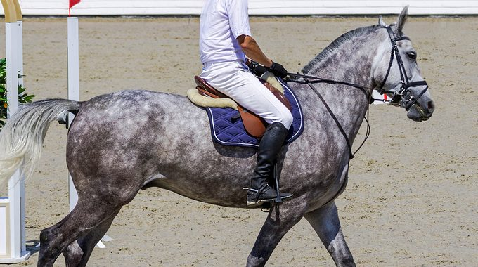 What To Do When A Horse Shakes Its Head Before A Jump
