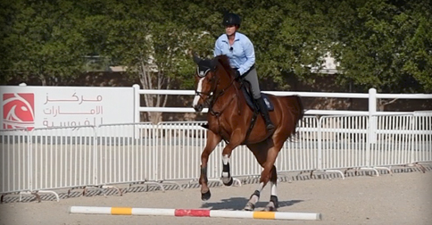 training your horses over poles on the ground