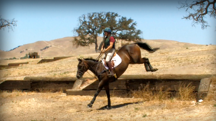training your three day event horse to jump banks and ditches