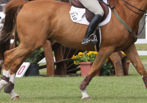 Exercises For A Thoroughbred That Gets Heavy And Strung Out In The Canter
