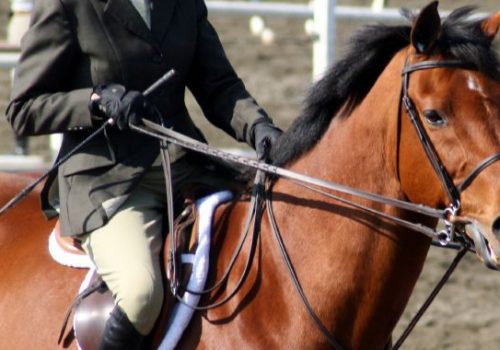 Horse Or Rider—Who's In Charge?