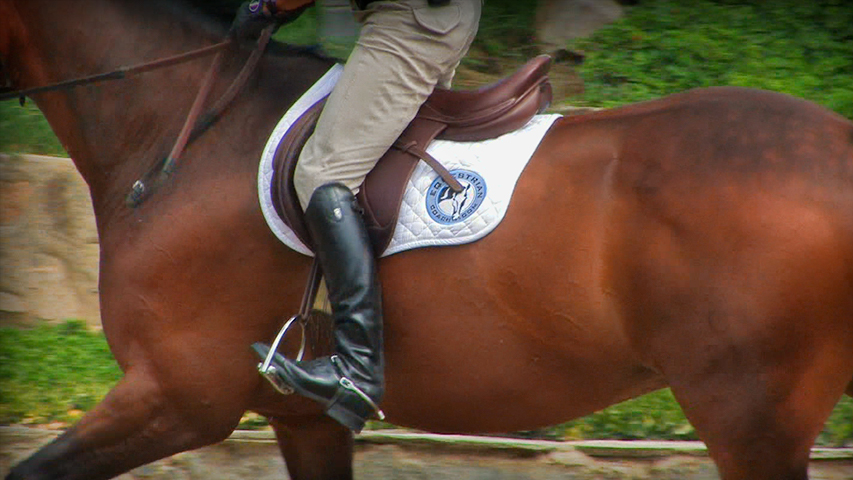rider's equitation tip for impulsion on your horse