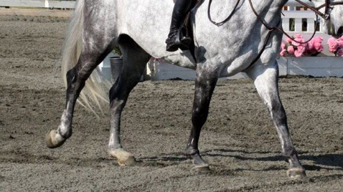 How To Encourage Your Horse To Relax And Lengthen The Canter When Nervous At A Horse Show