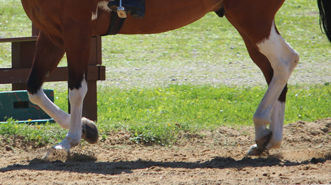 An Exercise To Teach A Horse To Collect The Canter And Not Break To The Trot