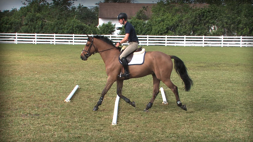 flatwork for your horse to prepare for a horse show