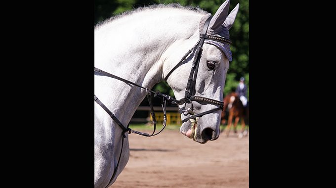 How To Gauge What Your Horse Needs To Work On
