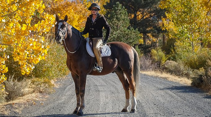 Stallion Traits: How Long Do They Last In A Gelding And Safety Tips