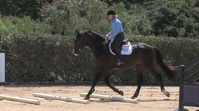 Does Your Horse Rush Through Trot Poles?