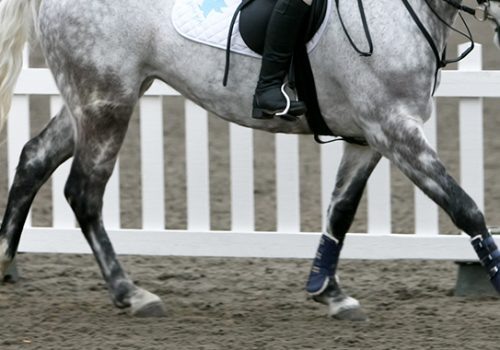 Why Does My Horse's Canter Feel Different From Right To Left?